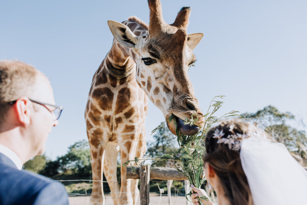 "Where three isn't a crowd. Nadine and Andrew spend their special day with the wildlife at Werribee Zoo.""We spent the day feeding the giraffes, watching the meerkats, walking past the emus and observing the hippos,"" Nadine says. ""it was both hilarious and memorable."""